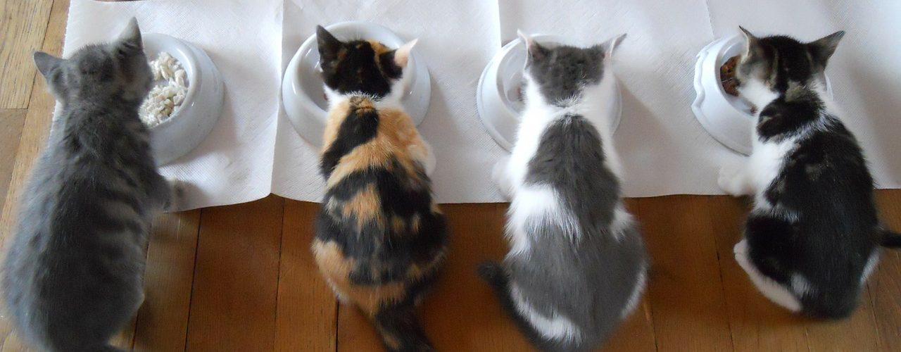 Adapter l'alimentation du chat